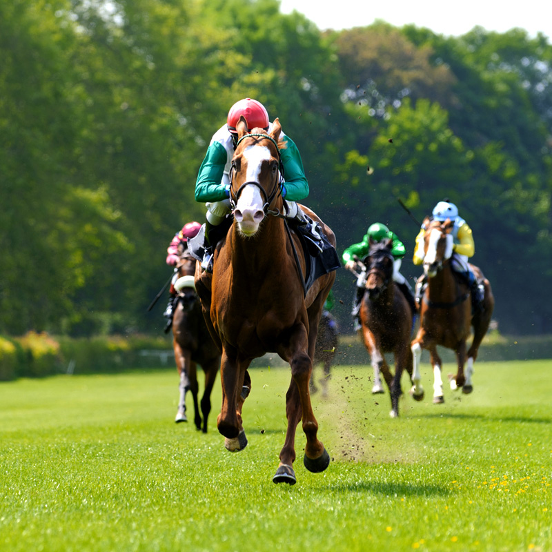 Group minibus transport for all race days, including Cheltenham, the Grand National, Ascot, Aintree, Haydock, Chester and Cartmell